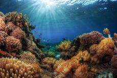 ocean_reef